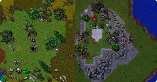 Tibia: The Completed Ultimate Druid Guide